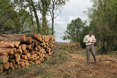 Initial training to create a logging & forestry business