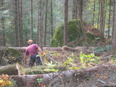 Forestry training for forest machinery operators