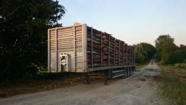 Wood logistics in the Great East: what possible innovations?