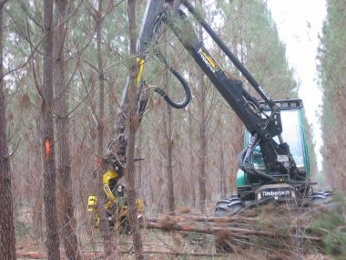 Evaluation & improvement of the productivity of your forestry operations