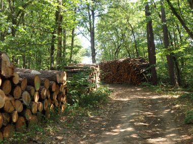 MOVAPRO, a decision support tool for the Aquitaine forest wood paper industry